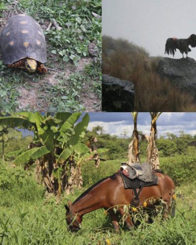 Un homenaje a la fauna Latinoamericana en su día