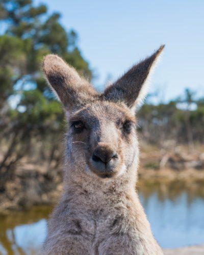 AFECTACIONES DE LOS INCENDIOS EN AUSTRALIA EN EL MUNDO