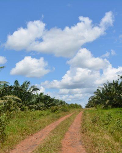 Los avances y retos para una producción sostenible en palma de aceite