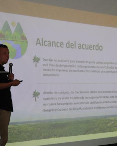 EL ROL DEL SECTOR PALMERO CON LA DEFORESTACIÓN EN COLOMBIA